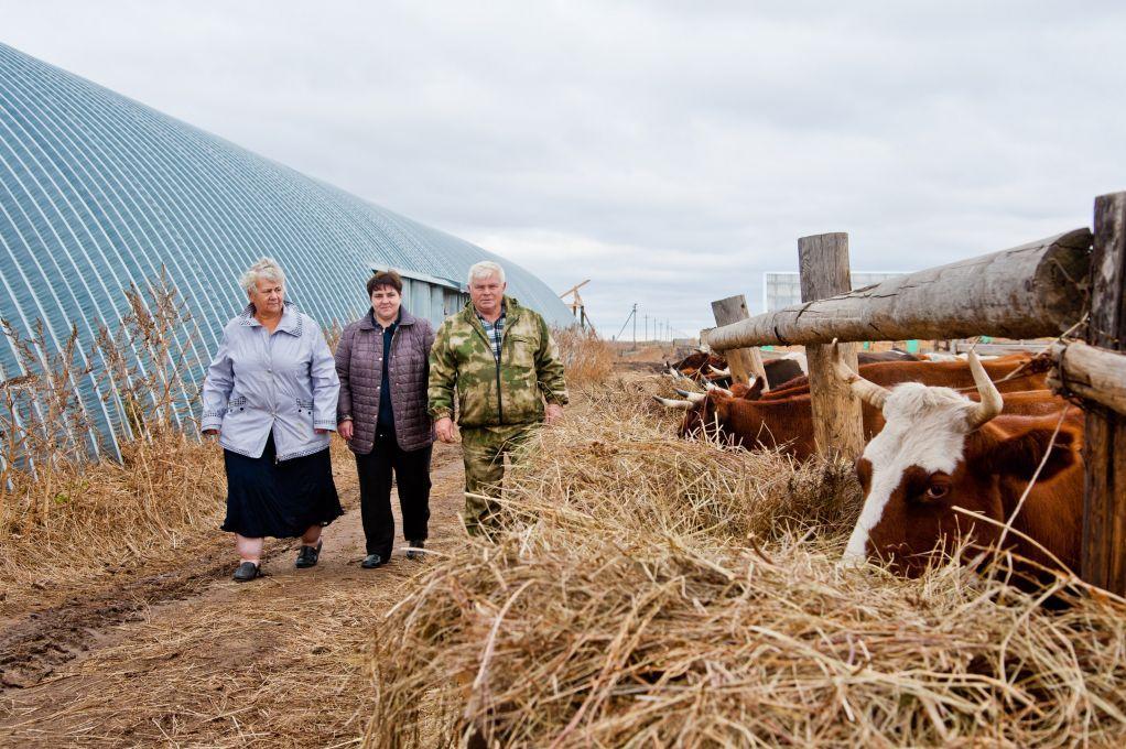картинка семейная ферма зависимости предпочтений пристальное